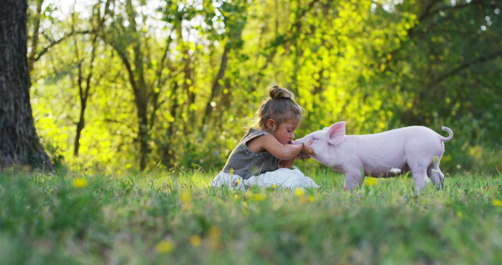 Carbon Neutral Pig